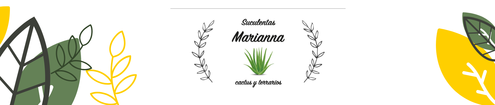 Suculentas marianna cactus y terrarios